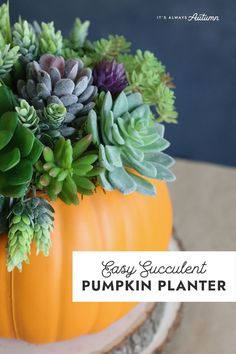 This easy fall craft is perfect for decorating your fall tablescape! Use faux succulents and a faux pumpkin for a fall planter that will last and last.