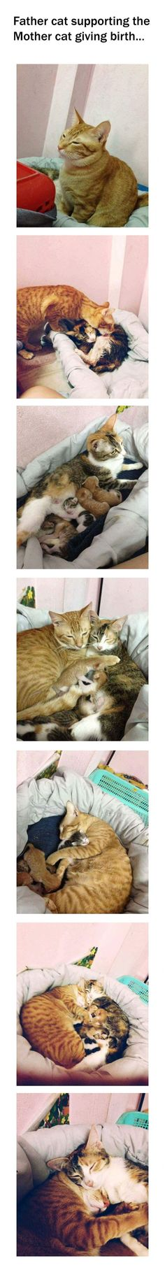Father Cat supporting Mother Cat