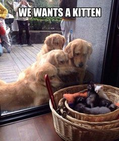 I Wonder If We're From The Same Litter // funny pictures - funny photos - funny images - funny pics - funny quotes - #lol #humor #funnypictures