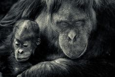 Mother's love by pattoise, via Flickr