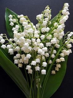 Lily of the valley/Convallaria majalis | Flickr - Photo Sharing!