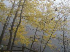 Die letzten Farben des Herbstes. Der Winter steht vor der Tür.