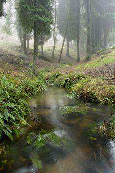 Landscape in Monte Aloia nature park. Pontevedra, Galicia, Spain.