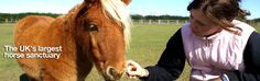 hey everyone this is redwings rescue horse sanctuary I love this sanctuary because I love horse and I have my own but I hate it when people abuse horses or abandon them it makes me feel sad :(