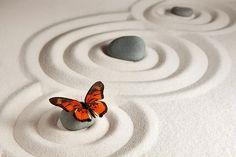 20,000 Butterfly Pictures & Images [HD] Butterfly Pictures, Butterfly Art, Frame Download, Zen Rock, Desktop Calendar, Zen Meditation, Inexpensive Gift, Landscape Prints, Photography Website