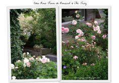 Ein Schweizer Garten: Eden Rose & the Fairy