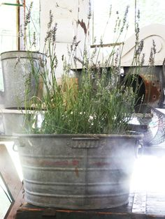 The 23 Best Things We Saw at the 2014 Brimfield Antique Show - lavender in galvanized tub, perfect for not having to worry about overwinter kill, just bring it in!