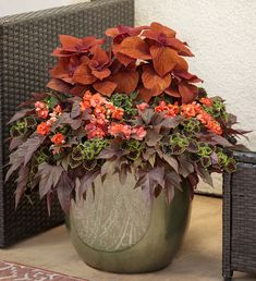 In this arrangement, orange impatiens light up the more sombre-shaded foliage morning glories and chocolate coleus and setting off the red coleus. Container Flowers, Flower Planters, Container Plants, Container Gardening, Backyard Garden Design, Lawn And Garden, Garden Pots, Shade Flowers, Orange Flowers