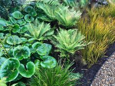 Award Winning Garden | NZ native plants in a border | The Plant Company White Flowering Plants, Foliage Plants, Garden Ideas Nz, Hedges Landscaping, Landscaping Ideas, Small Tropical Gardens, Plant Companies, Balinese Garden, Garden Landscape Design