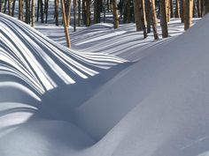 Powder - Bosque