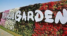 Сад Чудес – #ОАЭ (#AE) Самая длинная цветочная стена в мире и 45 миллионов живых цветов - это Miracle Garden в Дубае! http://ru.esosedi.org/AE/places/1000445933/sad_chudes/