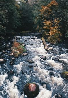 Moody Nature — accio-forest: Janhe - Vsco