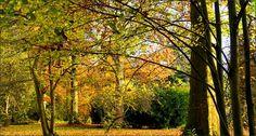 Novemberfarben - Jahreszeiten - Galerie - Community