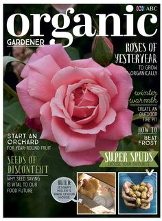 Isn't she lovely, isn't she wonderful... introducing the Lady Woodward rose on the front cover of our latest issue OUT TODAY! Get your copy today to find out all about this beautiful bloom and other old-fashioned roses and how to grow them organically. We show you how to build a fire pit, investigate the best spuds to grow in your patch, share top tips on beating frost in the garden, and start an orchard from scratch. Plus, learn why seed saving is vital to our food future. How To Build A Fire Pit, Organic Gardening, Isnt She Lovely, Free Ebooks, Frost, How To Find Out, Seeds, Bloom, Latest Issue