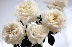White Perfumella Rose from the Tambuzi Farm in Kenya. Easy order garden roses online @ www.parfumflowercompany.com