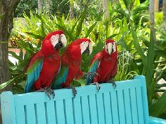 Radisson Aruba Resort, Casino & Spa: Macaws