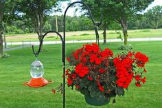 Where Is the Best Place to Hang Hummingbird Feeders?