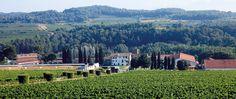 ALT PENEDES La bodega Segura Viudas cuenta con 180 hectáreas de tierra calcárea