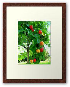 Dogwood Harvest Framed Print by DianaMatisz