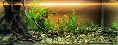 dirted nano aquarium - Google Search