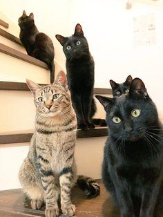 """猫野四季*さんのツイート: """"階段にて。 #ねこ #ネコ #猫… """""""