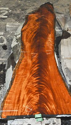 crotch belizean mahogany: gorgeous color and figure patterns in this log