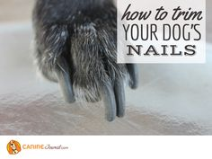 Sad Dog Stories, Pedicure At Home, Dog Nails, Happy Dogs, Home Pedicures
