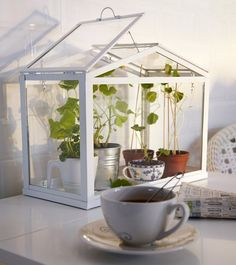 A Mini-Greenhouse For Your Home (use windows instead of glass pane?)