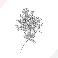 "Terrific Cost-Free Chrysanthemum flower Popular Chrysanthemums, better known when ""mums"" recommended to their good friends, will be late-season Chrysanthemum Drawing, Chrysanthemum Flower, Crisantemo Tattoo, Niece Tattoo, Crysanthemum Tattoo, Hollywood Tattoo, November Flower, Dotwork Tattoo Mandala, Birth Flower Tattoos"