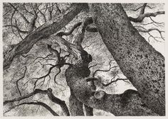 Limbs of a Coastal Live Oak, Santa Barbara, July 2015 | From a unique collection of landscape drawings and watercolors at https://www.1stdibs.com/art/drawings-watercolor-paintings/landscape-drawings-watercolors/