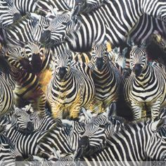 Jersey Digitaal Zebra Print - Tricot - Stoffen