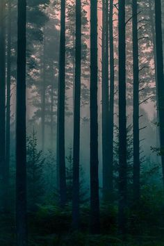 New Fantasy Landscape Forests Nature Trees Ideas Forest Photography, Landscape Photography, Photography Backdrops, Abstract Photography, Foto Nature, Nature Tree, Tree Forest, Fantasy Landscape, Forest Landscape