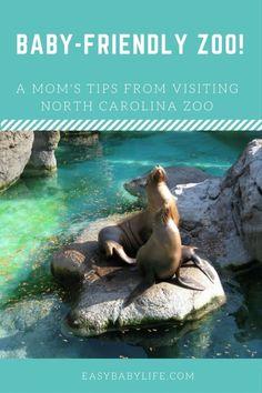Baby-Friendly Zoo Trip North Carolina With Toddler | NC Zoo North Carolina | Zoo with baby | zoo with toddler | baby-friendly zoo | zoo trip tips