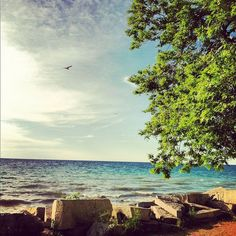 Trusted Local Businesses Compete For Your Business Lake Michigan, Wisconsin, Milwaukee Lakefront, Oceans, Lakes, Places Ive Been, Road Trip, Places To Visit, Dairy