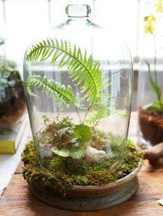 Garden Indoors: Design a Terrarium
