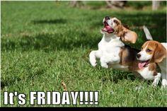 TGIF! its Friday!  #TGIF #dogs