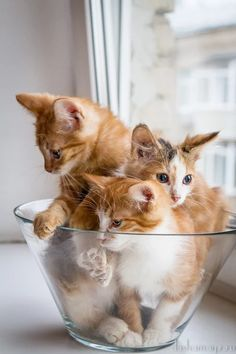 bowl of cuteness