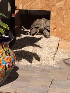 Keep Your Outdoor Tortoise Warm In Cool Weather Diy