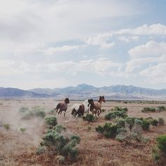wide open plains, wild horses in the american west