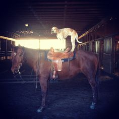 40 pictures of Maddie the Coonhound standing on things. (I died)