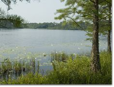 Laura S. Walker State Park in Waycross, GA. Located near the northern edge of the mysterious Okefenokee Swamp, this park is home to many fascinating creatures and plants, including alligators and carnivorous pitcher plants.