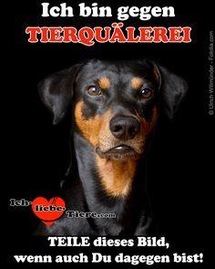 Ich bin gegen Tierquälerei! >> http://www.ich-liebe-tiere.com/ <<