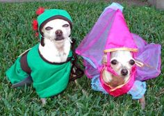 Dog couple costumes as prince and princess  http://barnaclebill.hubpages.com/hub/PetHalloweenCostumes
