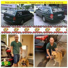TAXI DOG MONTANHA TRANSPORTE DE ANIMAIS NO RIO DE JANEIRO: PAULO & seu cão pastor AQUILES
