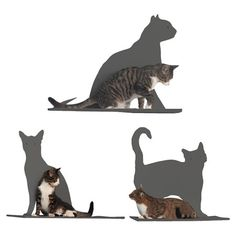Set of three powder-coated steel cat shelves with removable pads.      Product: Set of three shelves    Construction Mater...