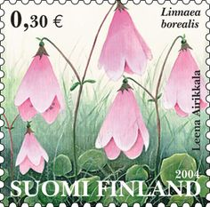 Linnaea borealis stamp from Suomi/Finland. This dainty wildflower is also native to North America where it is known as twinflower. It was named after Swedish botanist Carl Linnaeus, and it was his favorite flower.