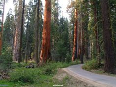 Sequoia National Park is a national park in the southern Sierra Nevada east of Visalia, California, in the United States. Description from homeinteriors.tk. I searched for this on bing.com/images