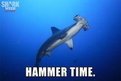 Too legit. #sharkweek
