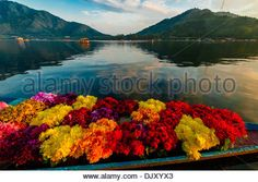 A merchant and his shikara (boat) loaded with flowers, Dal Lake in Srinagar, Kashmir, Jammu and Kashmir State, India. - Stock Photo