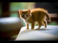 Cute Kittens Funny Photos